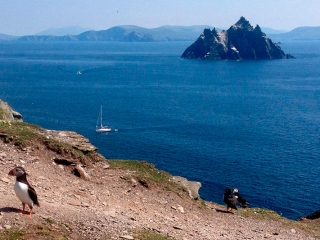 Puffin on Skellig Michael with Little Skellig in the background
